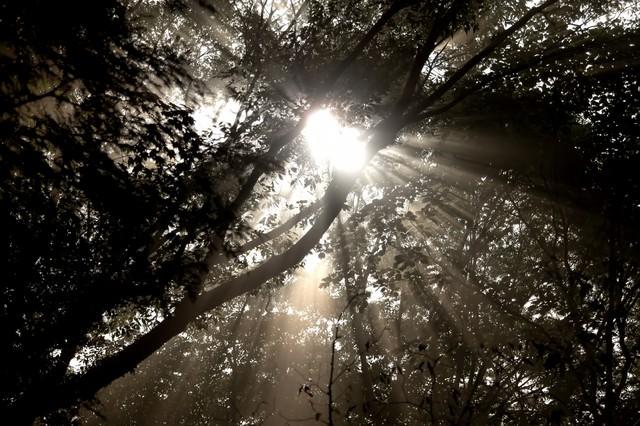 木漏れ日からの日差しの写真