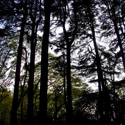 「雑木林のシルエット」の写真素材