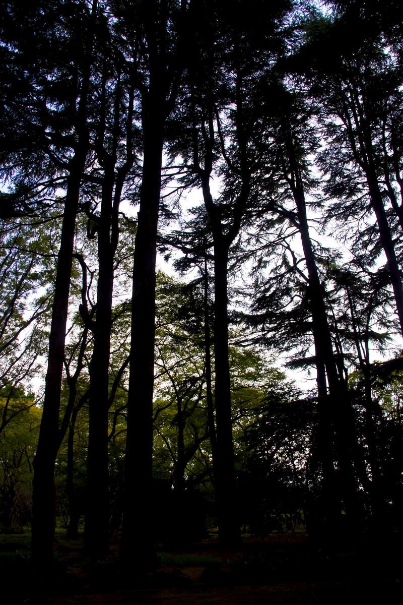 「雑木林のシルエット」の写真