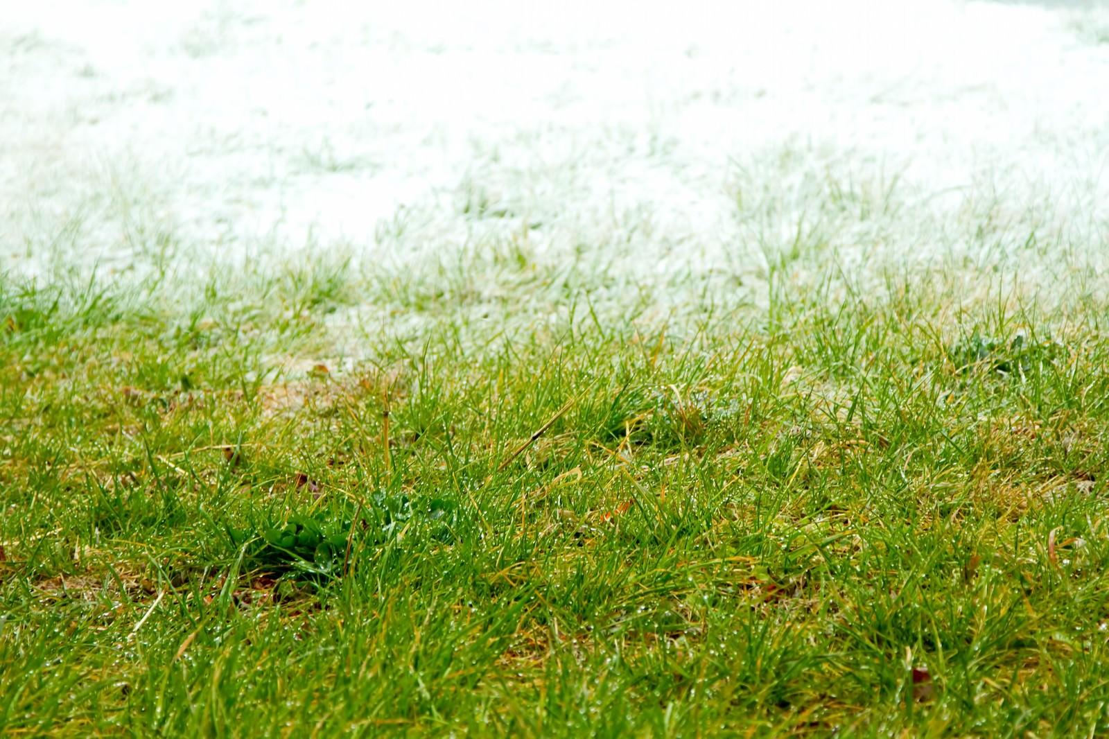「冬と春の狭間冬と春の狭間」のフリー写真素材を拡大