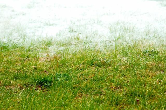 冬と春の狭間の写真