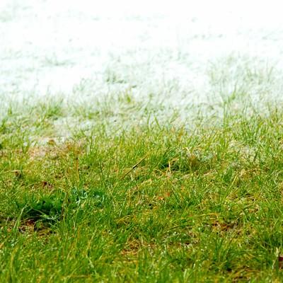 「冬と春の狭間」の写真素材