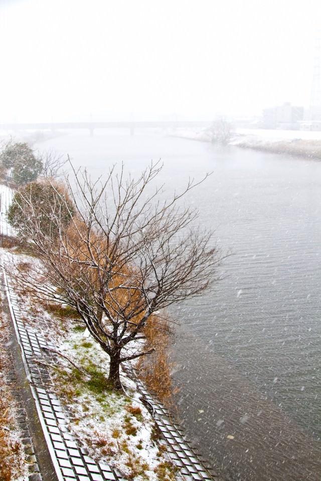 雪と河川敷の様子の写真