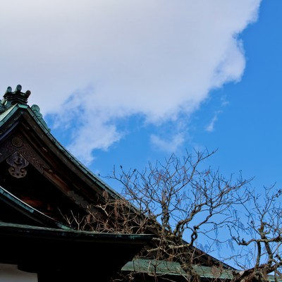 「青空と境内」の写真素材