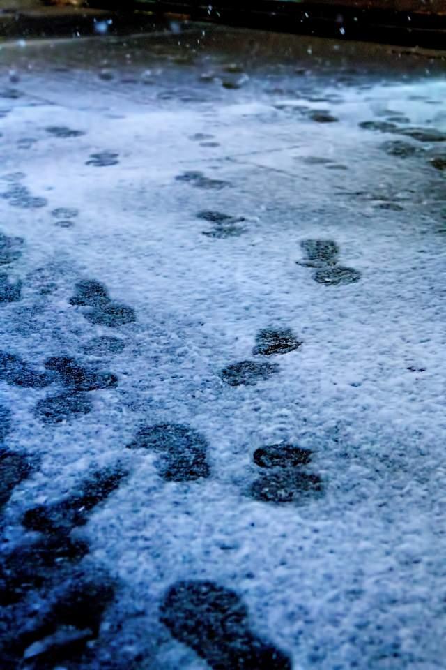 降り始めの雪と足跡の写真