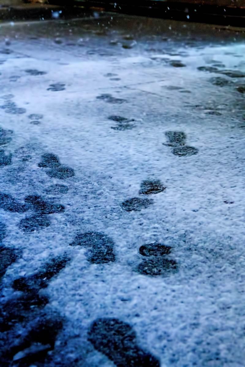 「降り始めの雪と足跡」の写真