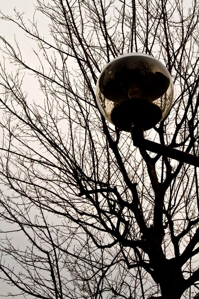 冬の街路樹と街灯の写真