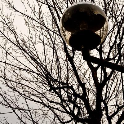 「冬の街路樹と街灯」の写真素材