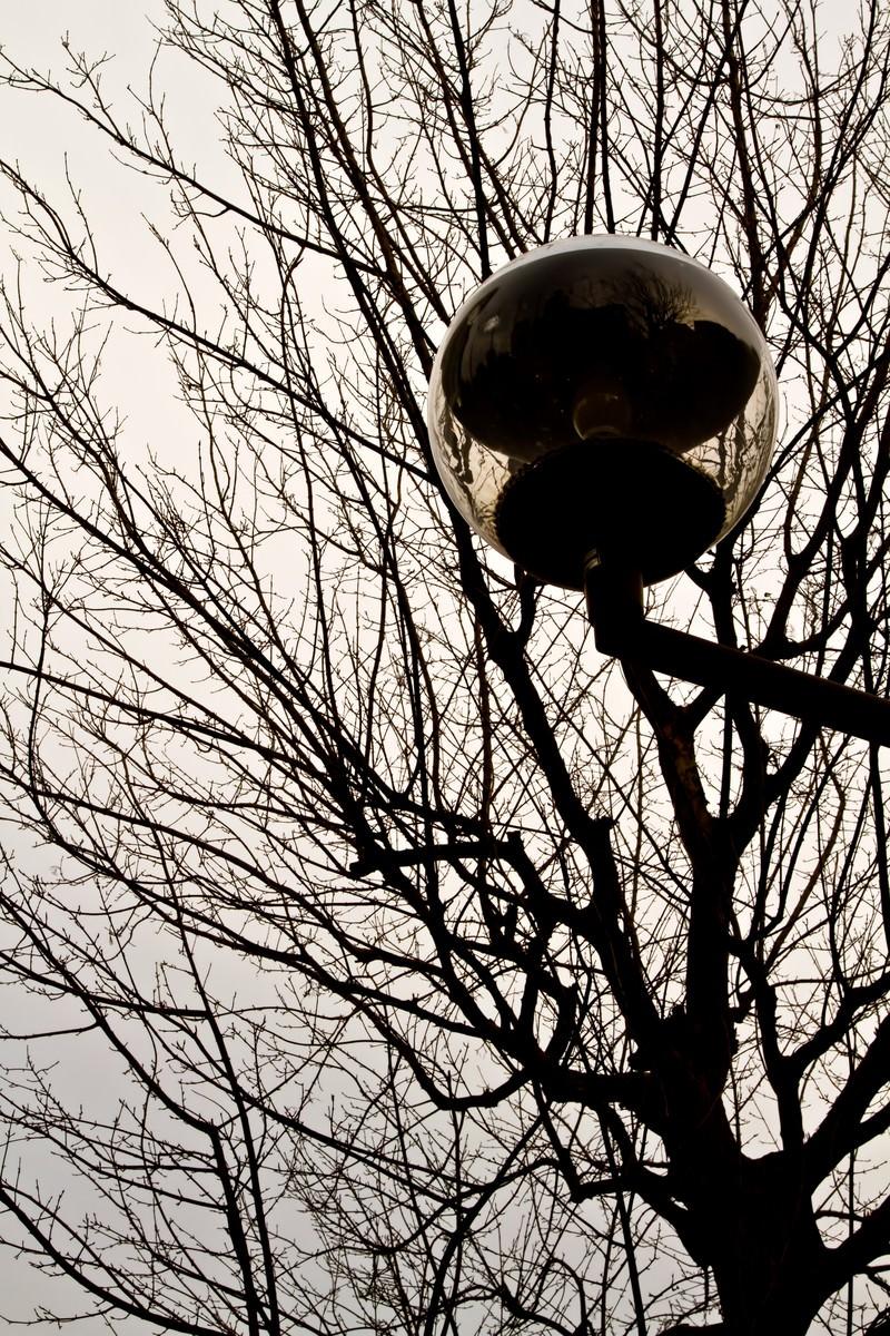 「冬の街路樹と街灯」の写真