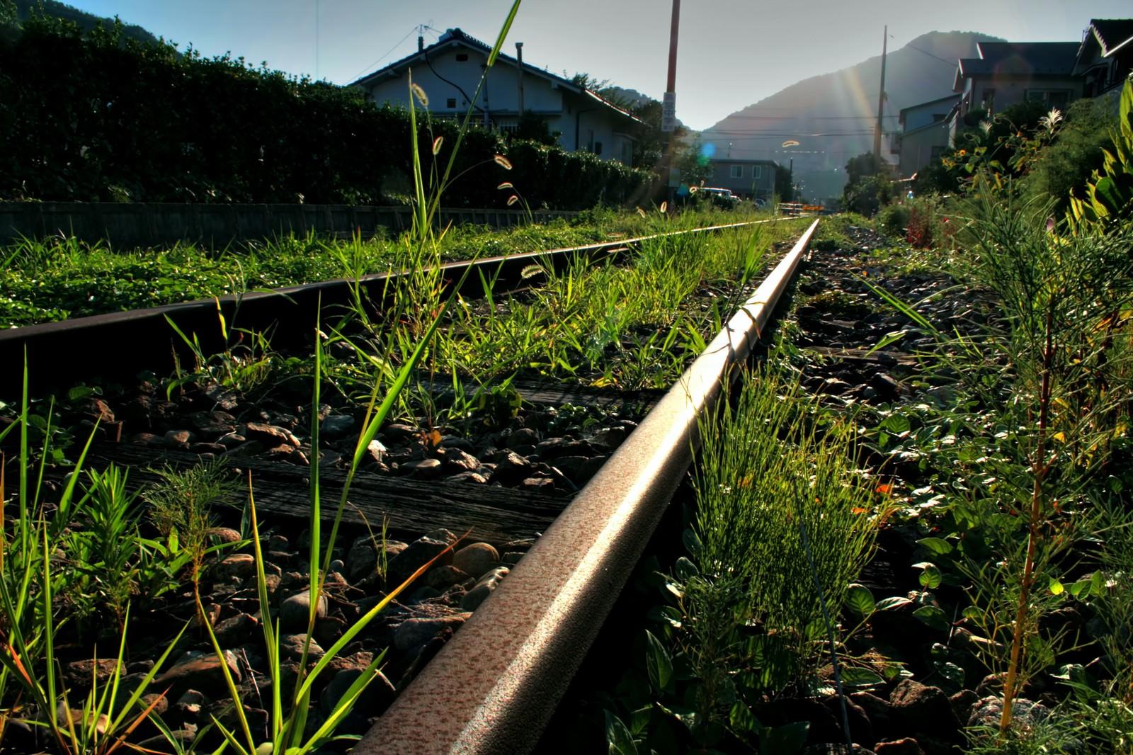 「廃線で雑草が伸びた線路」の写真