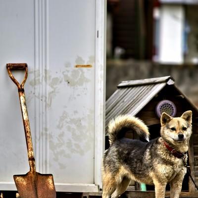 「番犬わんこ」の写真素材