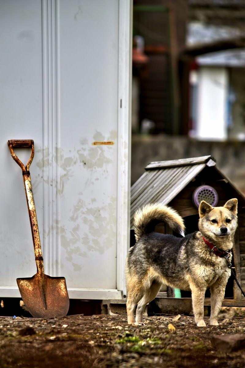 「番犬わんこ」の写真