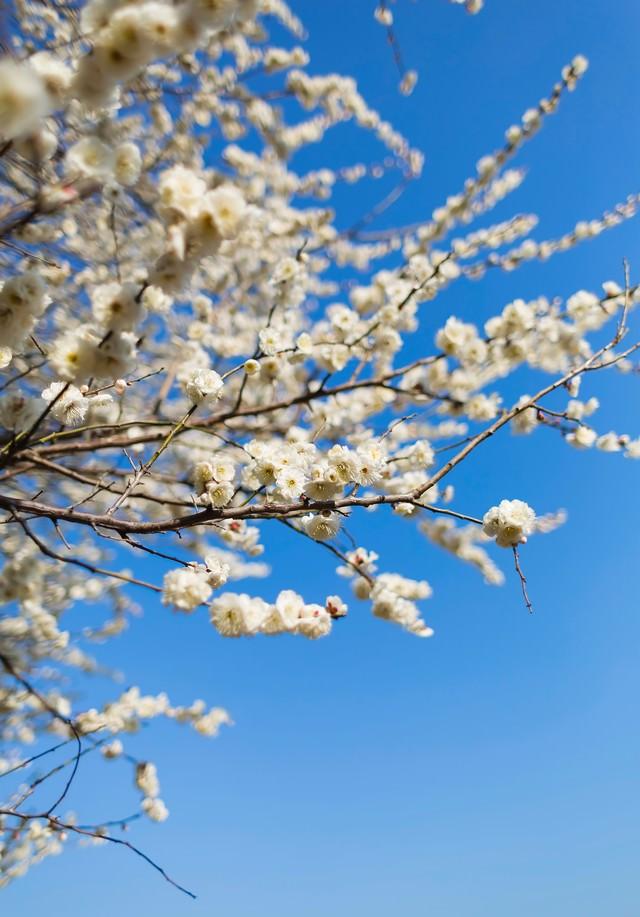梅の木と空の写真