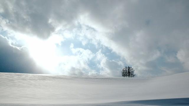 雪原の中の5本の木の写真