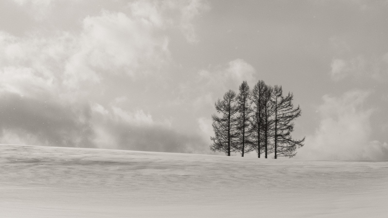 「雪原に生える5本の木」の写真