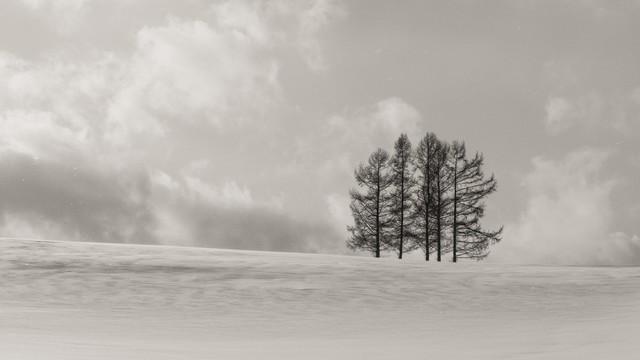 「雪原に生える5本の木」のフリー写真素材