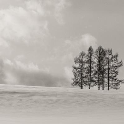 「雪原に生える5本の木」の写真素材