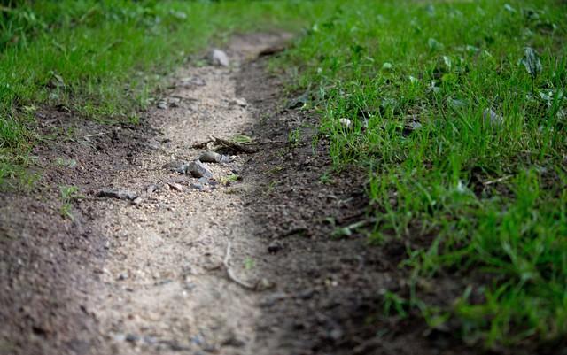 雨水の通り道の写真