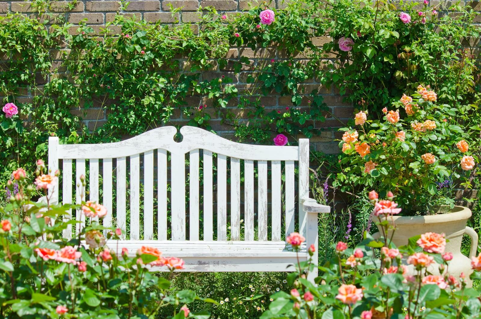 「バラに囲まれた白いベンチ」の写真