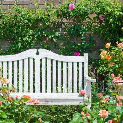 バラに囲まれた白いベンチの写真