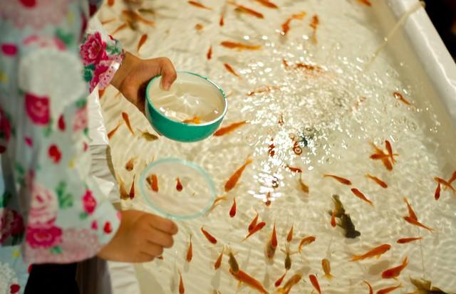 金魚すくいをする子供の写真
