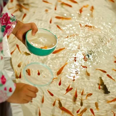 「金魚すくいをする子供」の写真素材