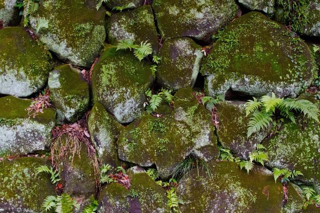 雑草が生えたボロボロの石垣の写真