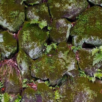「雑草が生えたボロボロの石垣」の写真素材