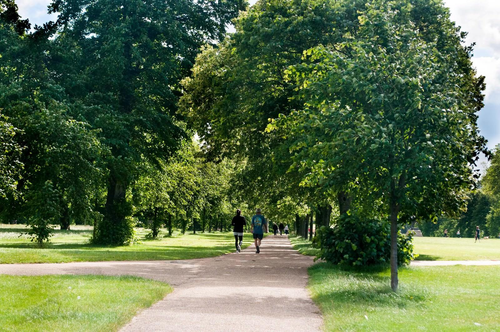 「緑の中のハイドパーク」の写真