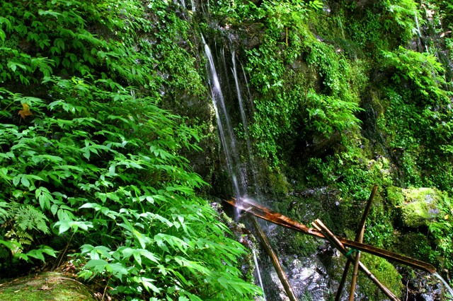 流れる湧水と緑の写真