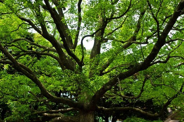 晴れた緑と大きな樹木の写真