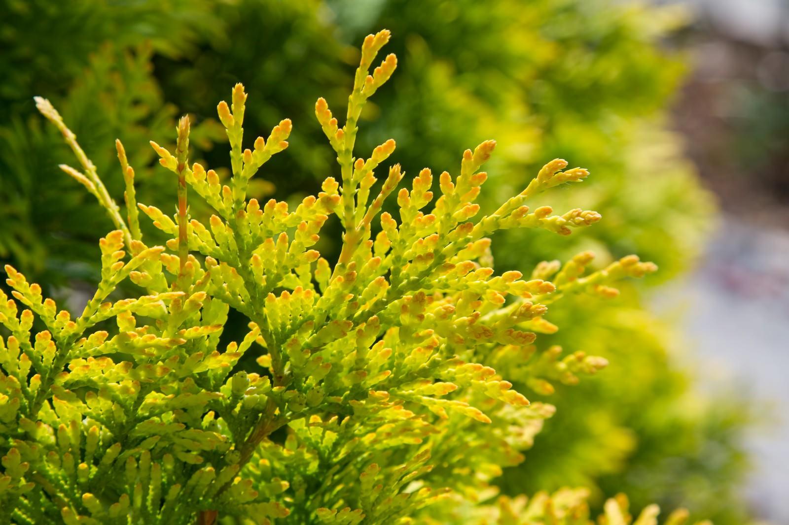 「春の兆しを見せる緑の葉」の写真