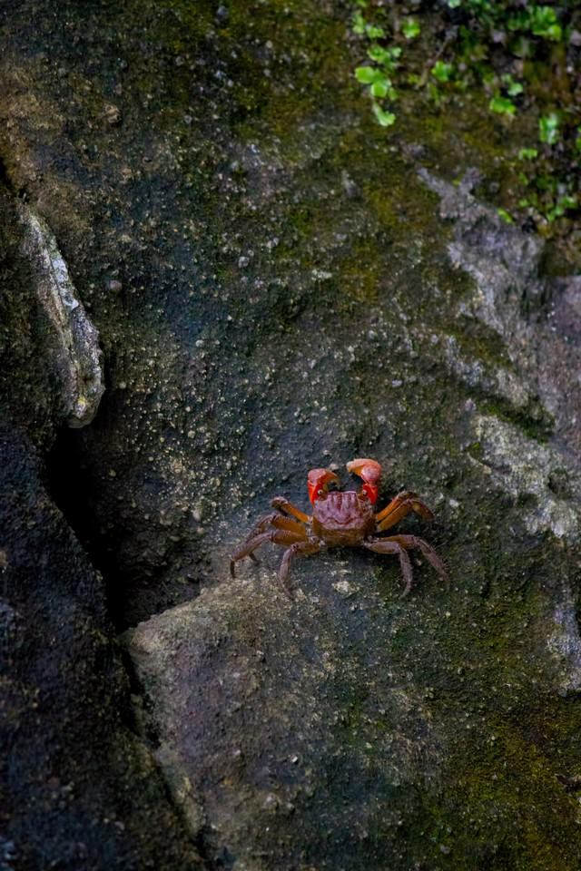 岩場を歩く小さな蟹の写真
