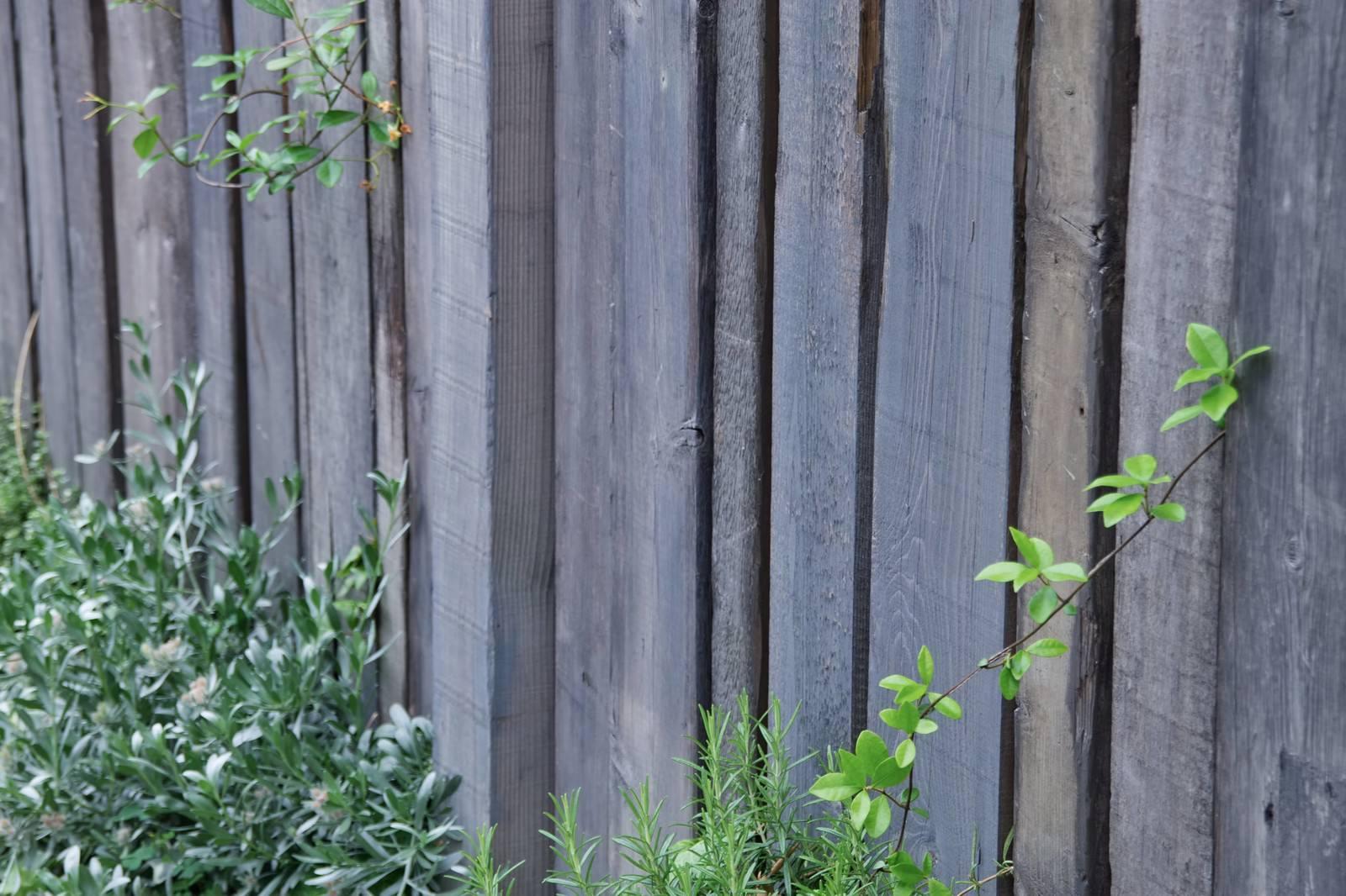 「木の壁と緑」の写真