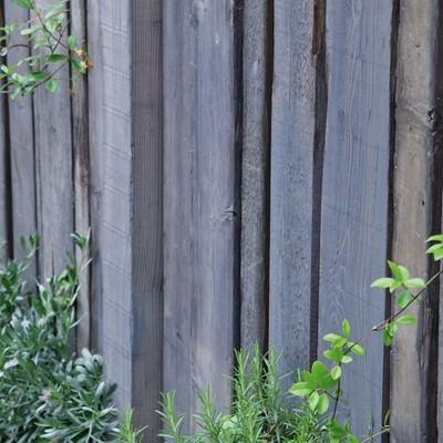 「木の壁と緑」の写真素材