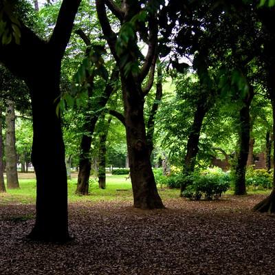 「代々木公園の薄暗い木々」の写真素材
