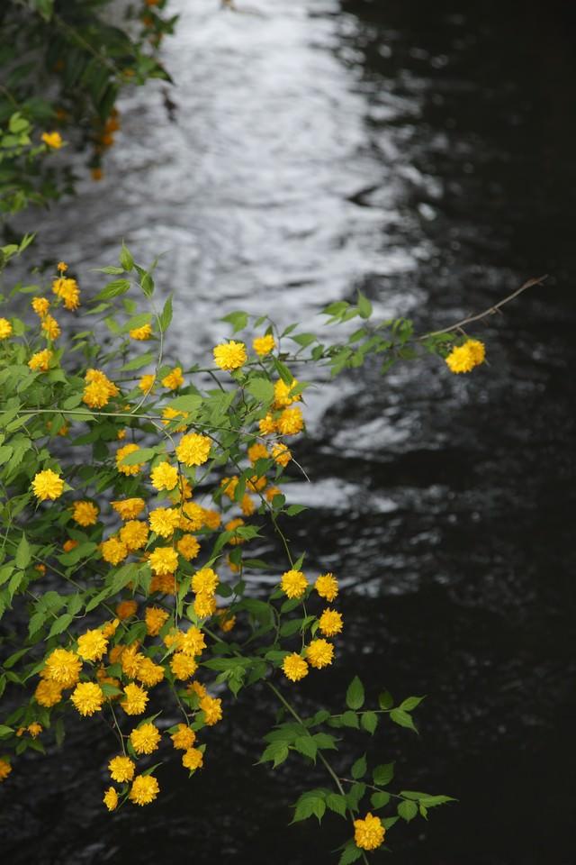川の光と黄色い花の写真