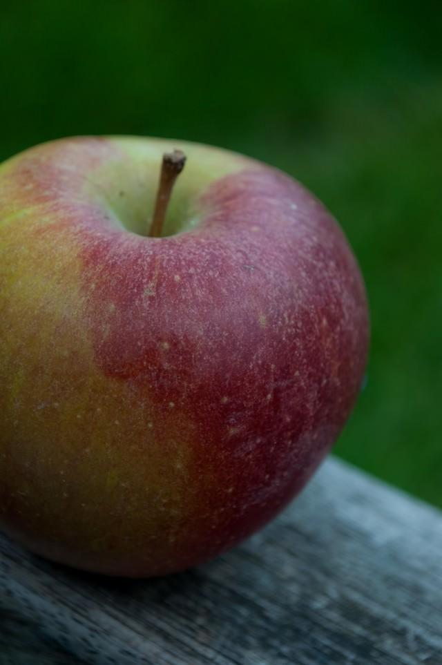 ベンチに置かれたりんごの写真