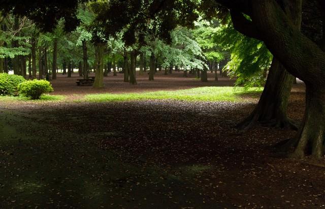 誰もいない代々木公園の様子の写真