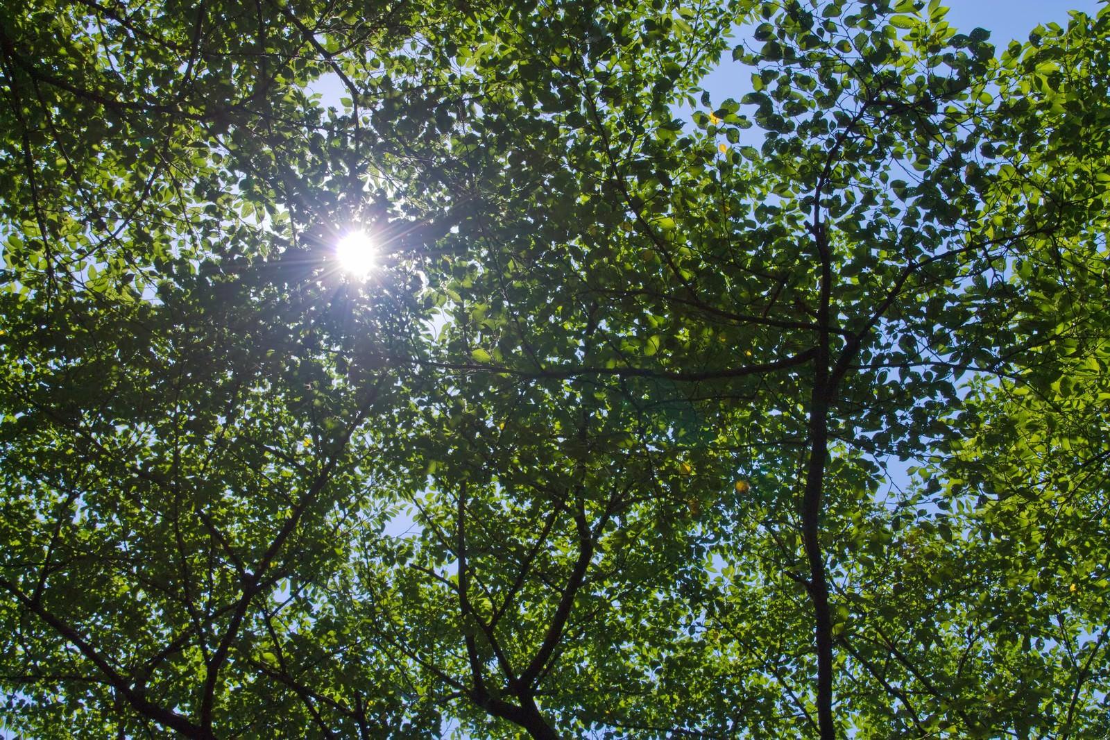 「木漏れ日の日差し」の写真