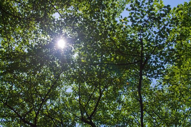 木漏れ日の日差しの写真