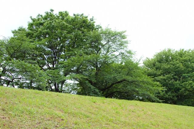 丘の上の樹木の写真