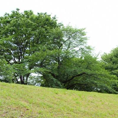 「丘の上の樹木」の写真素材
