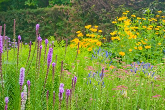 庭に咲く花の写真