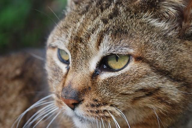 横を向く猫の写真