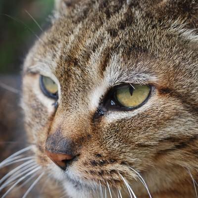 「横を向く猫」の写真素材
