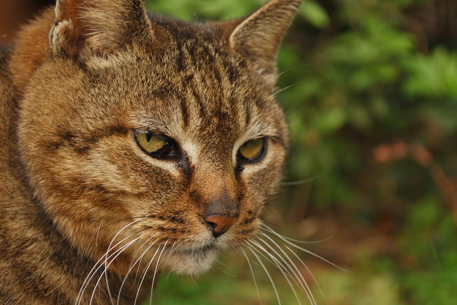 「睨みつける猫」の写真