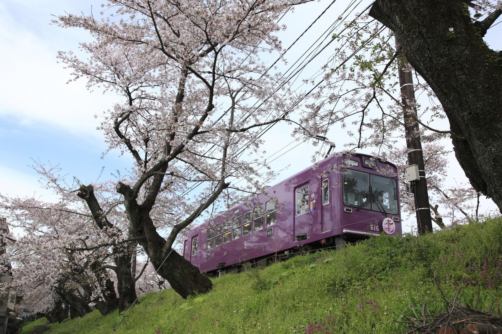 「サクラの木と電車」の写真