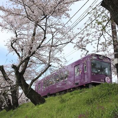 サクラの木と電車の写真