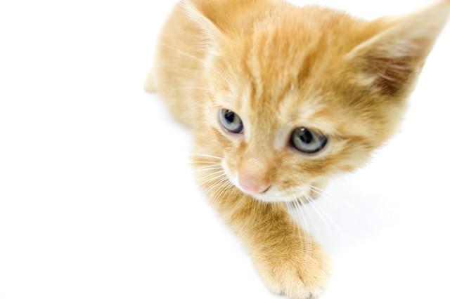 歩き出す子猫ちゃんの写真